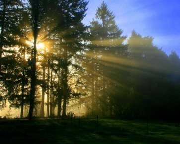 Morning sunlight bring peace in you. If you are an empath, feel the peace from the picture.