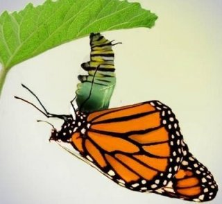 A butterfly is a transformation, not a better caterpillar